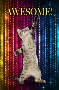 Disco Kitteh is pumped!